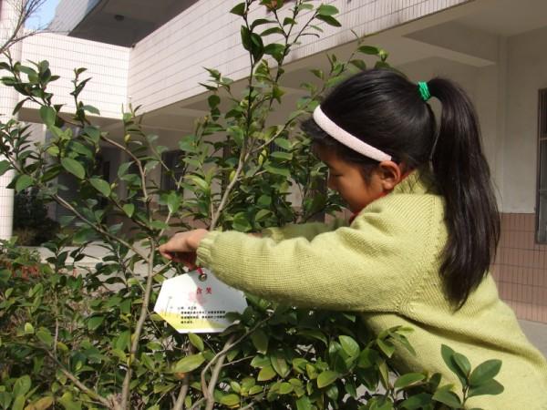 """植树节清晨,环球小学开展了""""我为小树挂牌"""