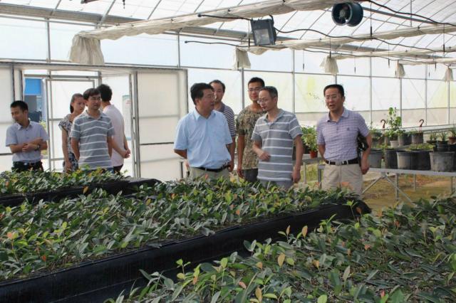 名优苗木培育基地,与吕永城校长交流了苗木基地的发展前景和管理措施