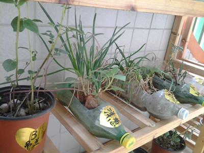 雷甸幼儿园植物角生机盎然