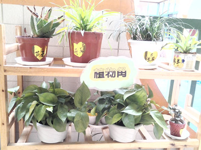 塑料瓶手工制作花盆植物角