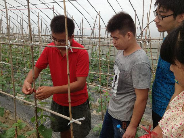湖州现代农校:基地的甜瓜又熟了 - 埭溪中学 - 湖州市现代农业技术学校